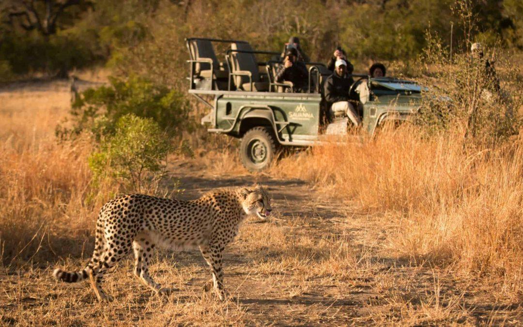 Safaris at Savanna