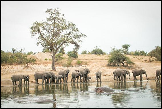 Wildlife Blog – July 2019