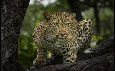 Wildlife Blog – February 2021