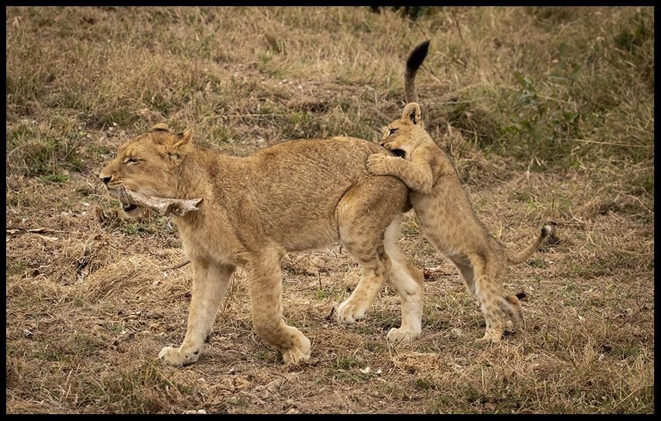 Mhangene pride